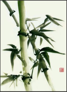 bamboo_by_pauline