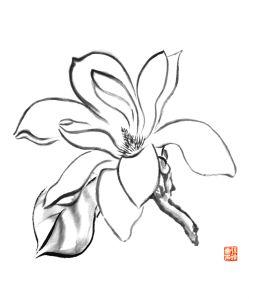 Magnolia brush painting