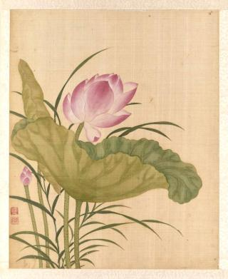 Lotus, painting by Yun Bing