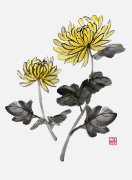 Chrysanthemum_0828_ba